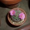 2007年5月15日。花びらの質感もまるでプラスチックのようw