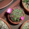 2007年5月15日。この作り物のような花が大好きだ。
